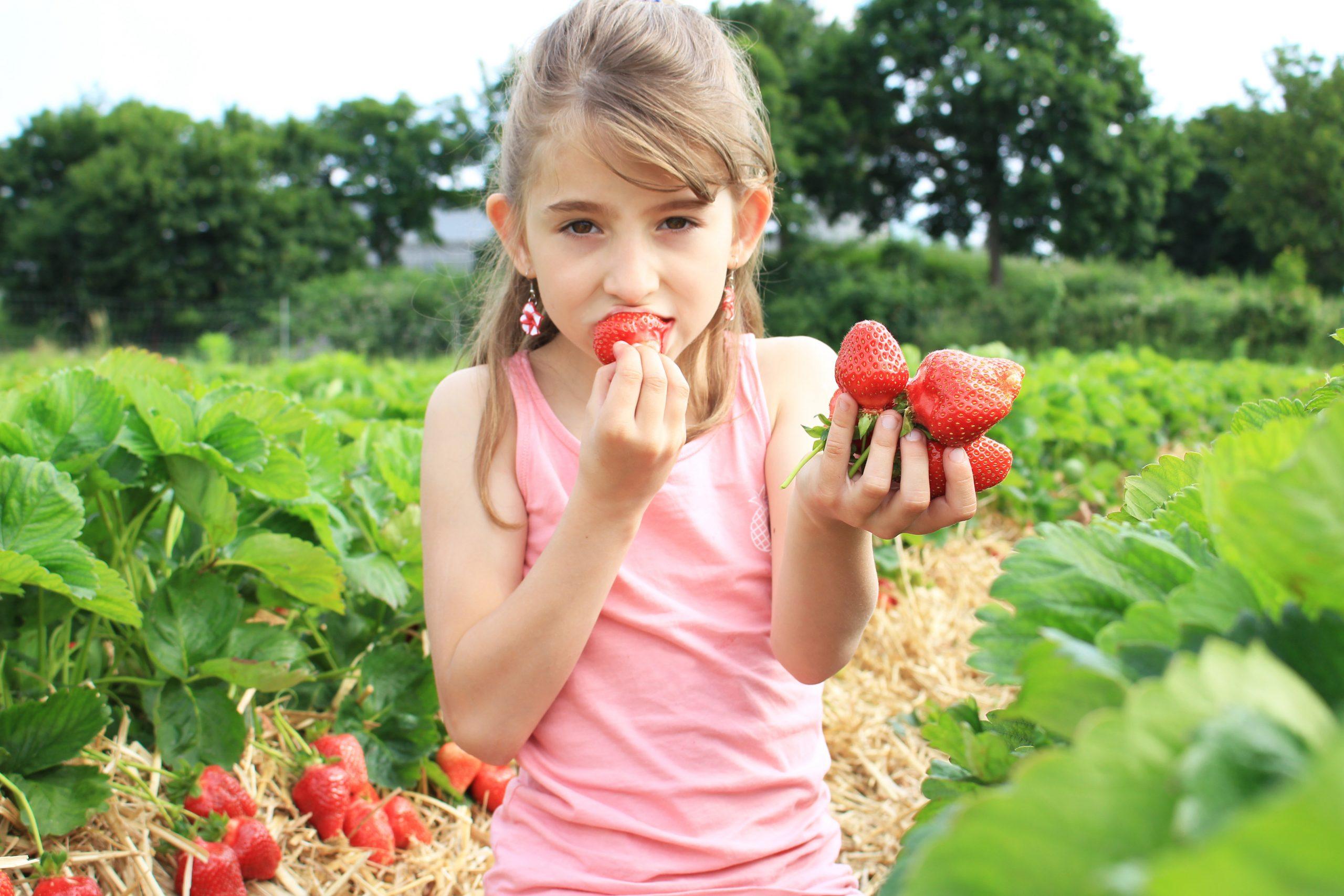 Dida-Erdbeeren-1-scaled